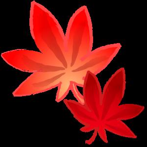 2枚の紅葉(モミジ)