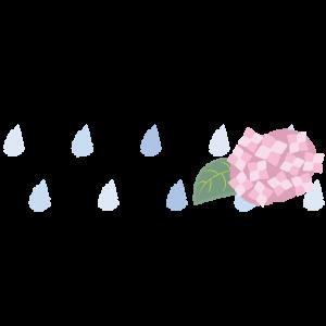 雨と紫陽花ライン(左)