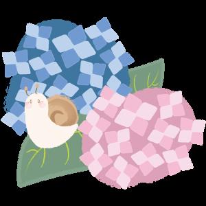カタツムリと紫陽花(アジサイ)