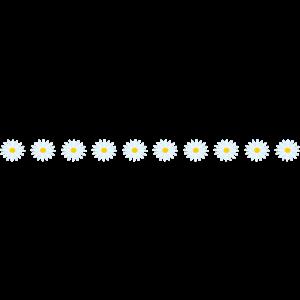 白い花のライン