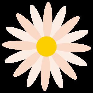 マーガレット(ピンク色)