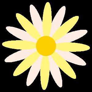 マーガレット(黄色)