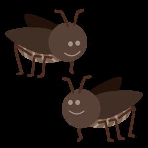 コオロギ(蟋蟀)